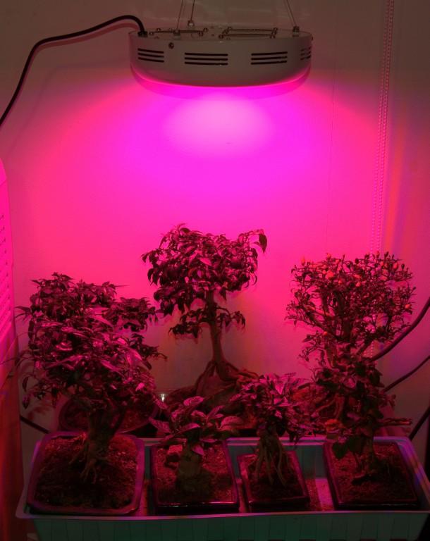 Подсветка для цветов светодиодная своими руками 71